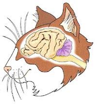 The Feline Brain