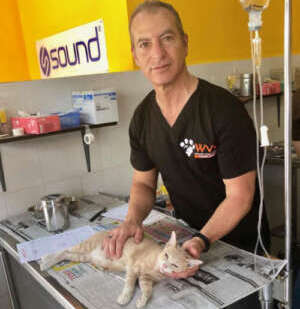 Spaying and Neutering Cats in Chang Mai, Thailand - Worldwide Veterinary Services International Training Centre by Dr. Arnold Plotnick - Catster.com