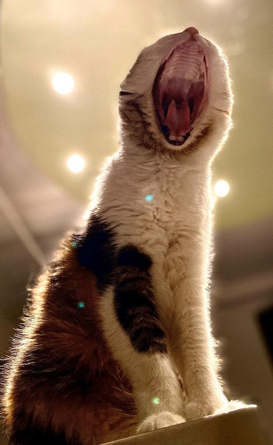Mittens Yawning