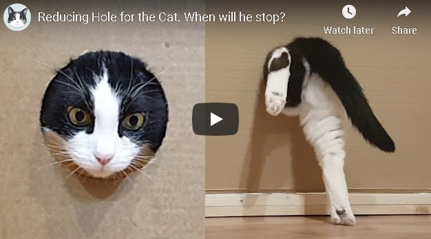 Cat fitting through small holes