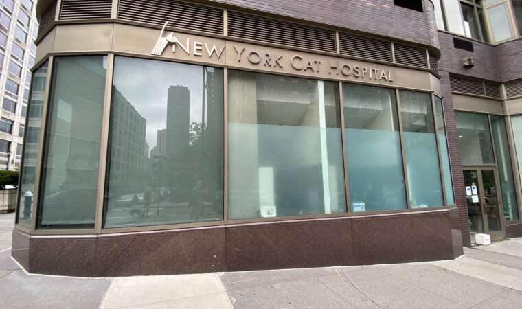 New York Cat Hospital